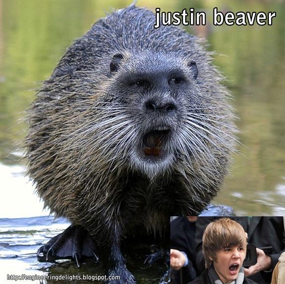 justinbeaver