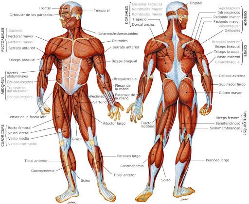 Natación y más músculos | desafioatlante