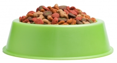 dry cat food in a bowl