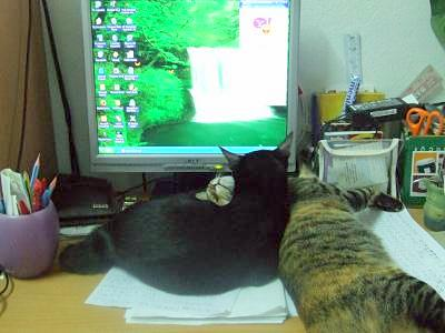 two cats by a computer