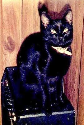 Peeper a tamed feral cat