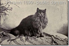 Blue Persian Gentian from 1899
