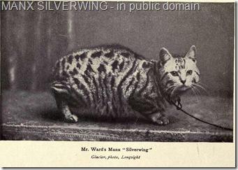 1900s Manx cat