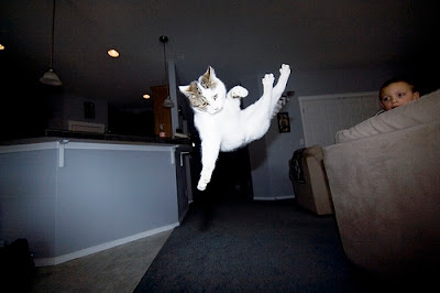 flying cats pictures of cats