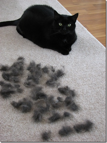 furminator cat sheeding