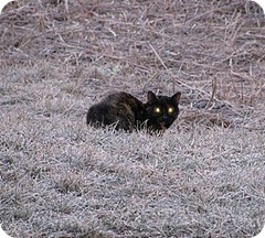 cats eyes glowing in the dark