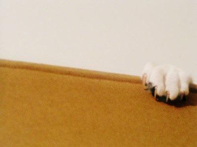 cat-claws-fofurasfelinas
