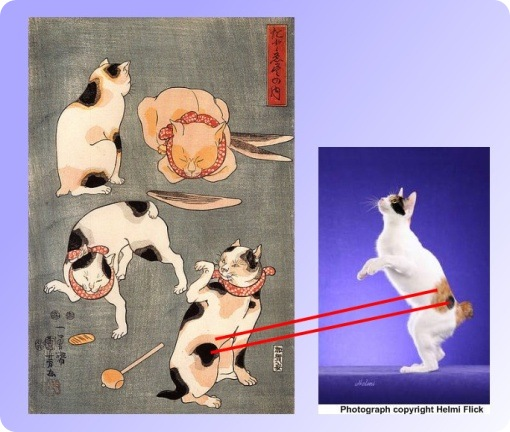 japanese bobtail old and new comparison-2