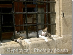 cypriot cat tabby and white