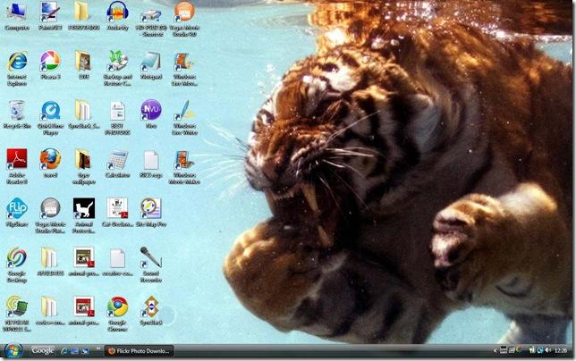 tiger-wallpaper-22