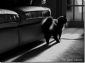 black cat wallpaper 3