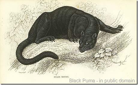 black puma print