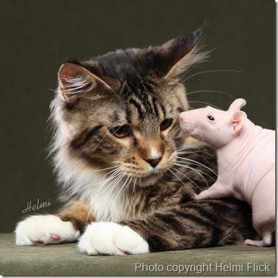 cat and rat caption competition