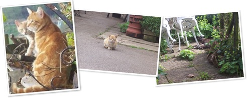 View Feral cats in the UK