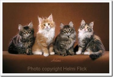Domestic cat colors