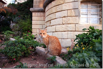 feral cat in Malta