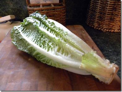 saving lettuce