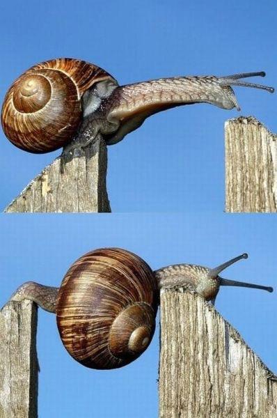 snailp