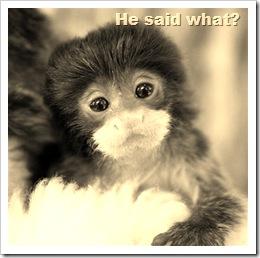 cute-monkey
