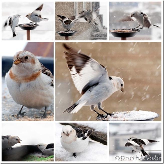 aggressivefugle