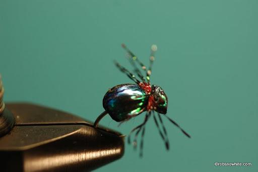 Generic Beetle