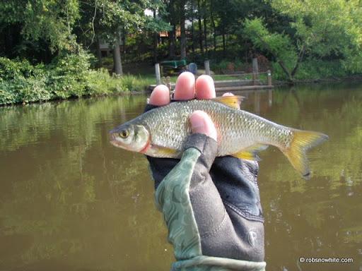 grass carp, reston, va