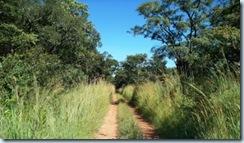 Road to Kalambo 1