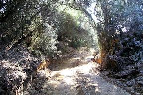 Vegetación iberoafricana