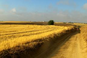 campos de La Sagra Toledana