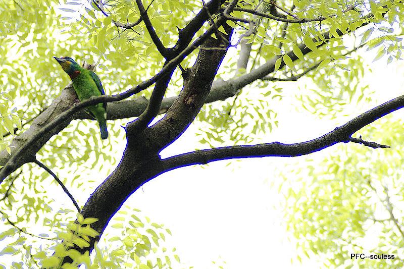 2010.05.26植物園 試鏡
