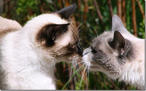 beso de gatos (7)
