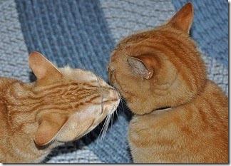 beso de gatos (11)