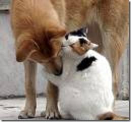 beso de gatos (14)