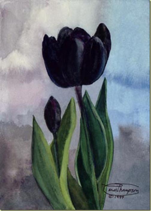 f28-black-tulip