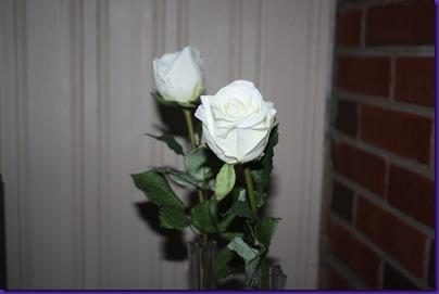roser 002