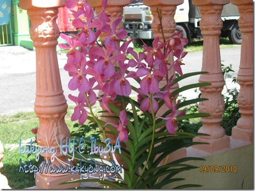 pink-orkid-ori
