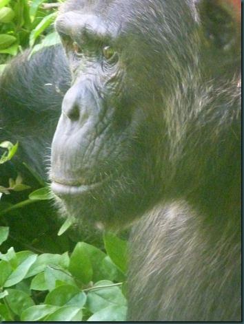 Queen Eliz park and Kampala 239 (2)