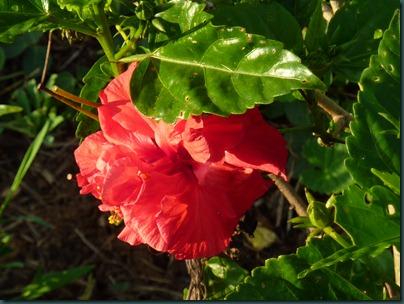 Landscaping Dec. 2010 032