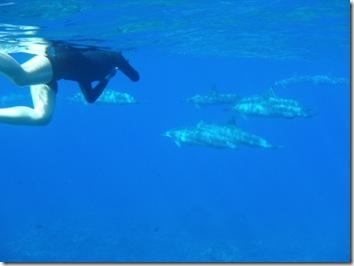 ドルフィン・イルカ・ハワイ島