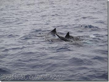 ハワイ島コナ・イルカ・ドルフィン
