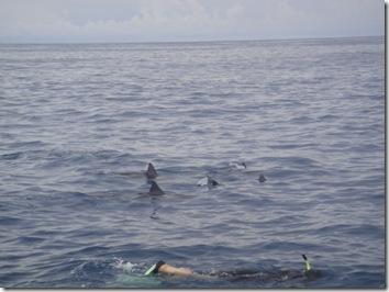 イルカと泳ぐ・ハワイ島・ドルフィンスイム