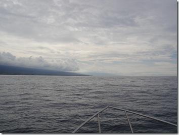 ハワイ島・イルカツアー・ドルフィン