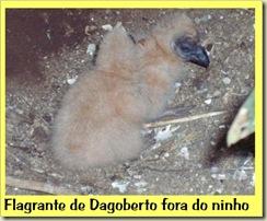 Dagobertinho