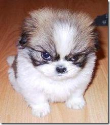 mad_puppy-11968