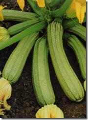 Zucchini chiari