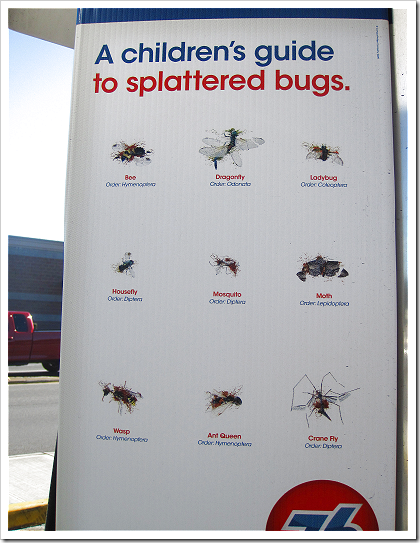 A children's guide to splattered bugs