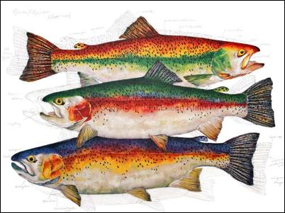 Rainbow Rainbow: by Eileen Klatt