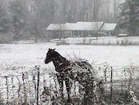 neighbors horse
