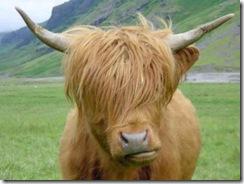 vaca-emo