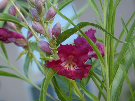Botanicusorg  a freely accessible Webbased